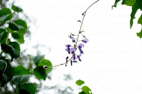 free images  leaf, flower, flowers, nature, purple, front view,