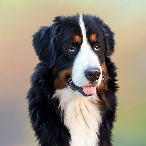 Realistic drawing of a dog Berner