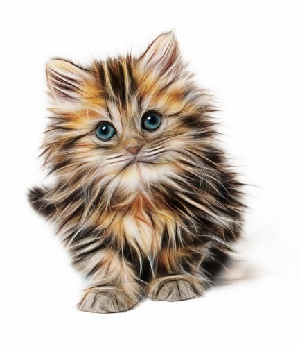 free images   Cat Doodle 3d for Wallpaper