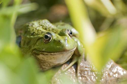 free images  Toad