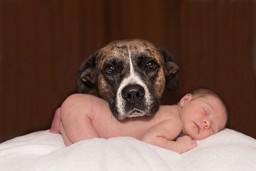 Adorable pet posing next to newborn baby