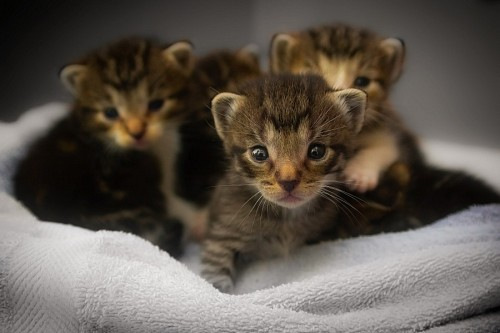 free images   Newborn cat babies