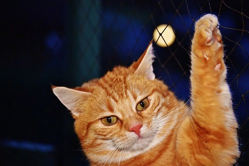 free images  Kitten with an angry face hung from the fence in the moonlight