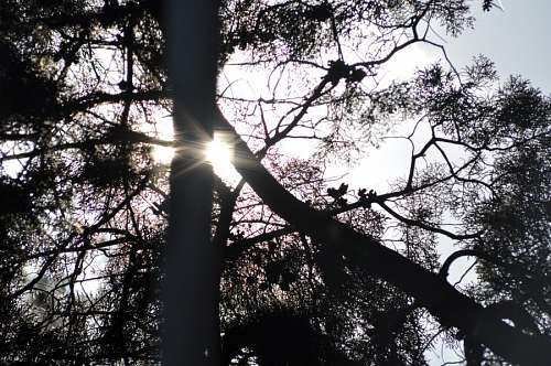Backlit, silhouette, sun, branches, tree