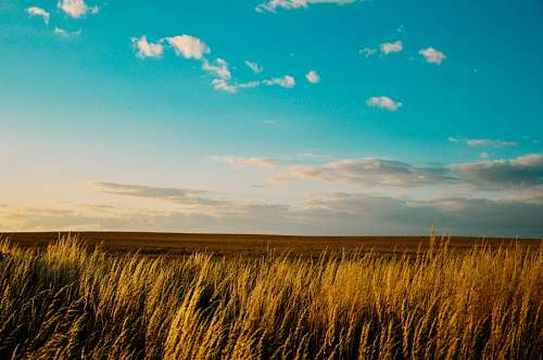 free images  Field landscape