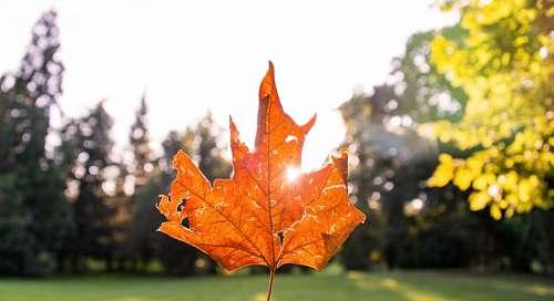 Leaf Autum
