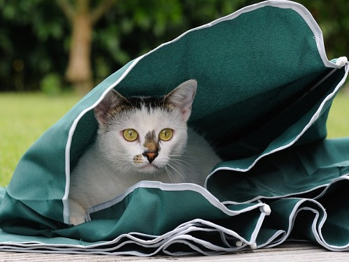 Kitten hiding in small tent