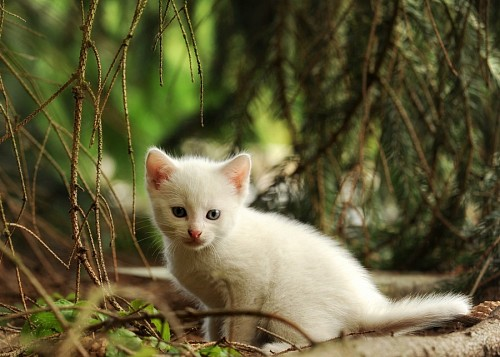 Tender baby pet in the forest