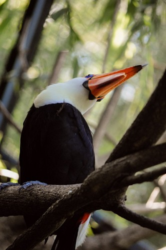 free images  Toucan