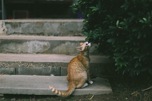 free images  Quiet cat smelling leaves of tree