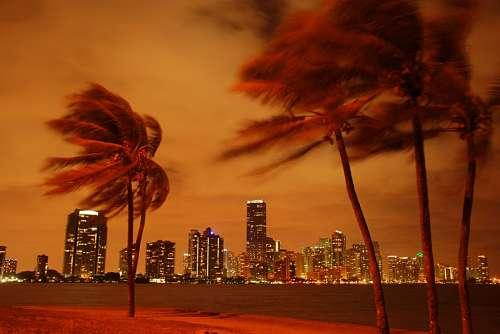 free images  Miami