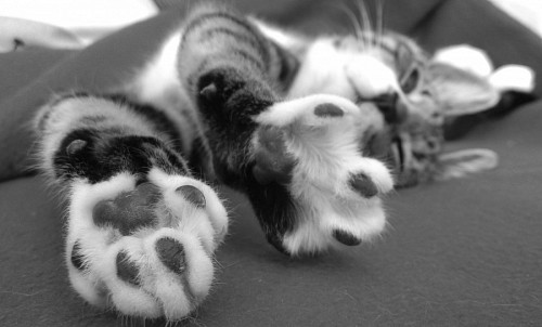 Black and white cat paws