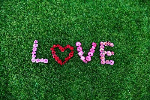 free images   Lawn with flower decoration