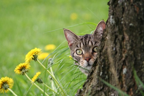 Kitten leaning behind the tree