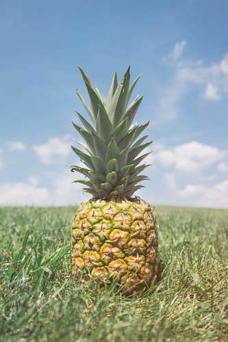 free images  Pineapple