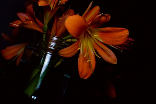 Artificial Orange flowers on black background