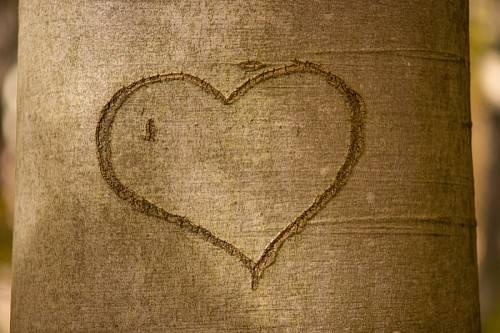 free images  Heart carved in tree