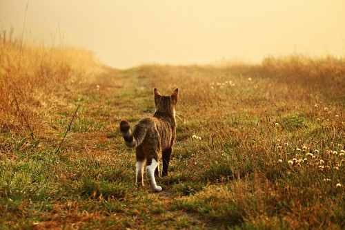 free images  Cat watching the horizon in a field