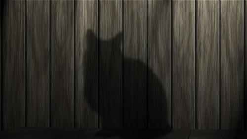 Feline shade