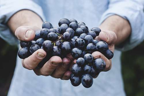 free images  grapes