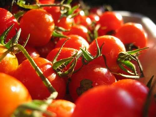 free images  tomato, tomatoes, fruit, vegetable, red, ingredien