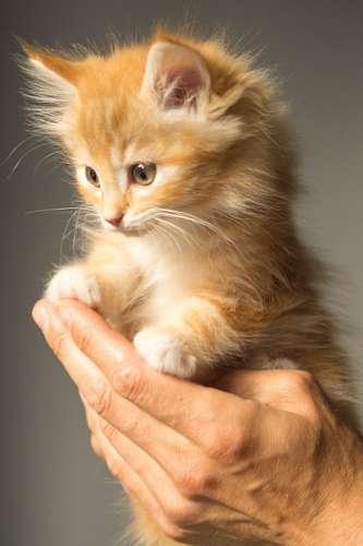 cute cat baby wallpaper