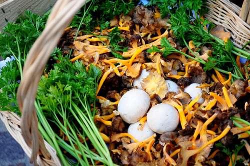 fungus, fungi, champignone, mushrooms, nature, foo