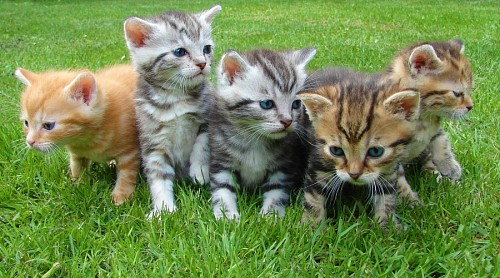 Pack of kittens on the grass