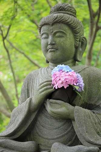 free images  buddha