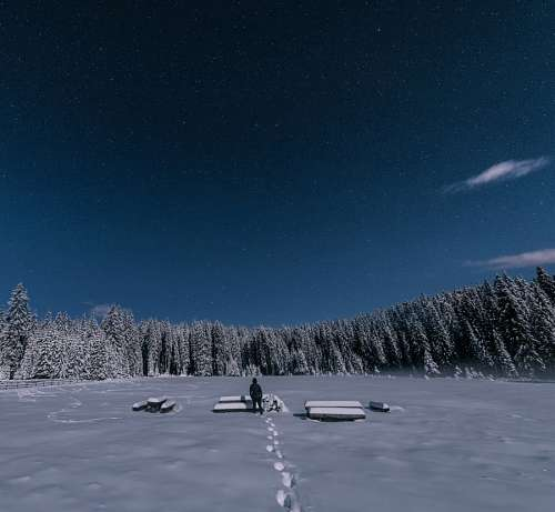 free images  Night at the snow forest