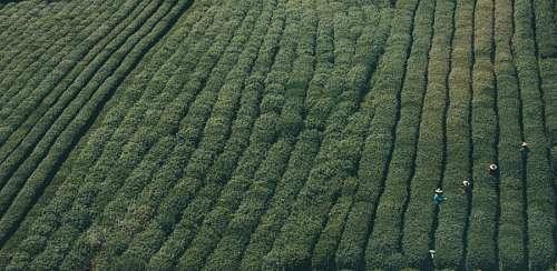 free images  Farming