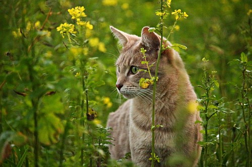 Curious kitten between flowers