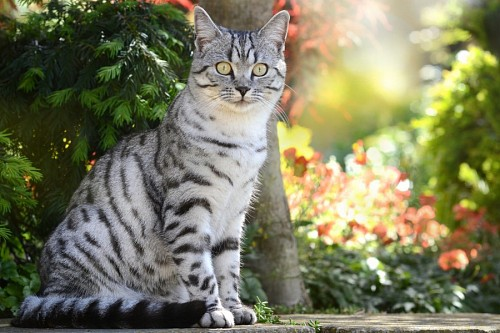 free images  Gray tabby cat with vibrant look in the garden