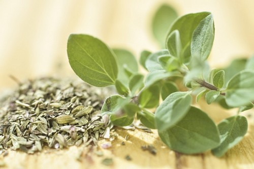 free images  Fresh and Dry Oregano