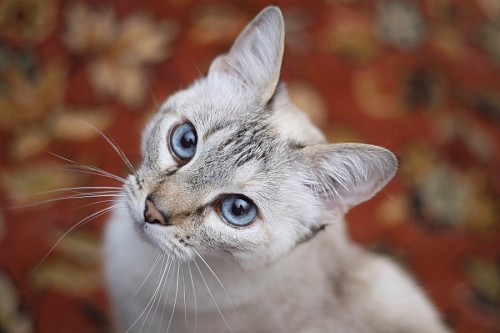Beautiful kitten with bokeh effect