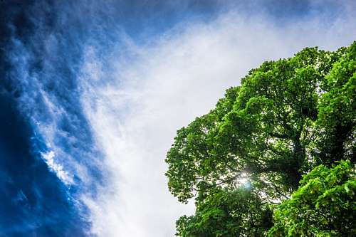 free images  landscape, sky, green, tree, trees, light, lights,