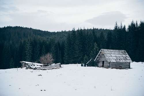 free images  Snow forest cabin