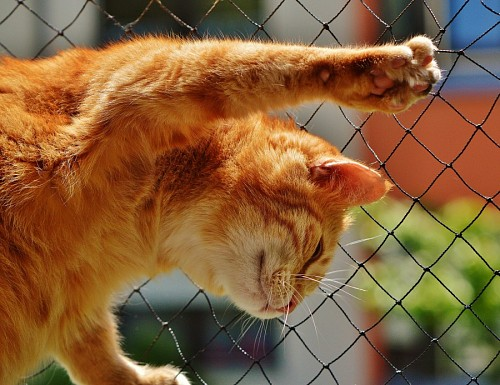 Naughty golden kitten climbing the fence
