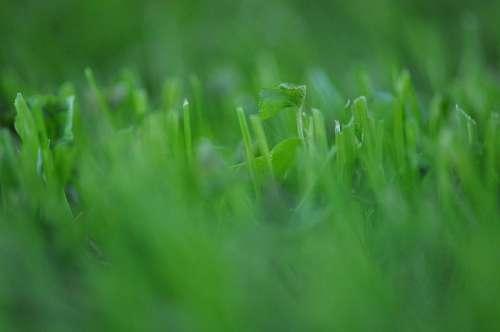 Grass, Green, Texture, Textures