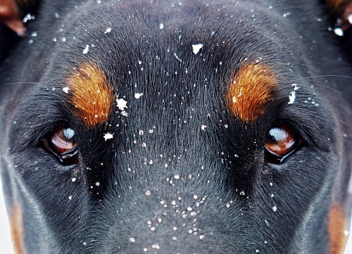 Beautiful canine look in the snow