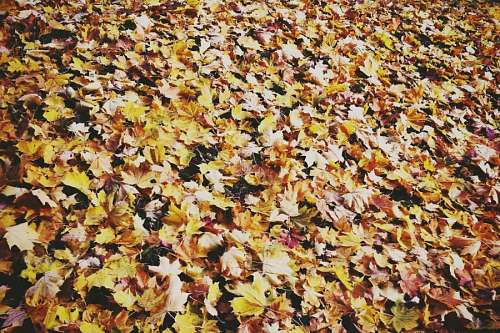 leaf, leaves, front view, autumn, background, back