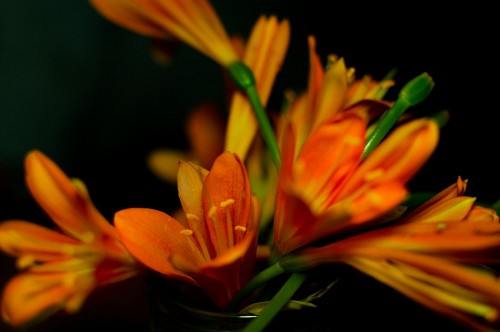 Artificial flowers on black background