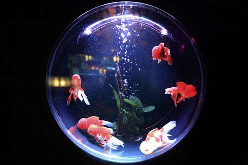 free images  Fishbowl