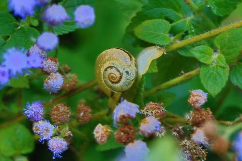 free images  Snail