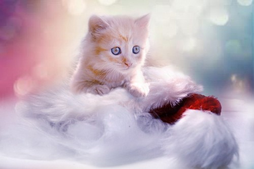 free images  Tiny kitty for wallpaper 4k