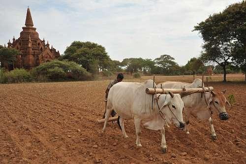 free images  Bagan, Birmania