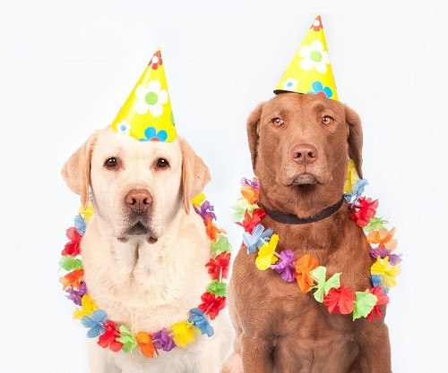 Funny pets prepared for the party