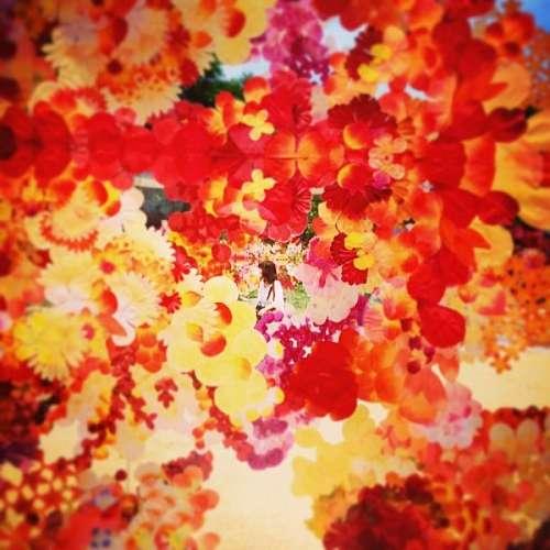 sunset, background, background, autumn, leaf, leav