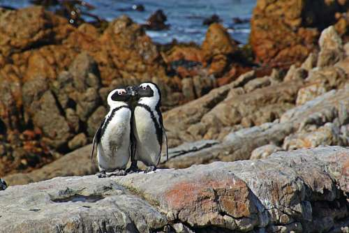 Couple of penguins on the rocks