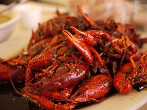 free images  shrimps